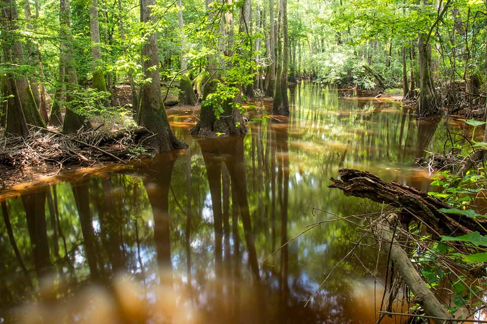 Beautiful Rivers at Congaree National Park