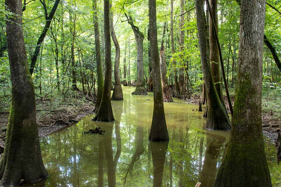 Trees under water at Congaree National Park
