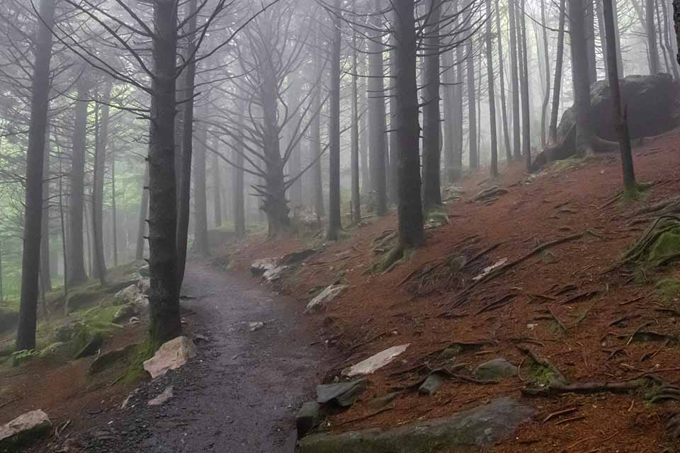 Roan Mountain Spruce Forest