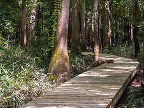 Boardwalk Loop Trail