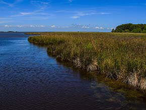 Currituck Banks Reserve