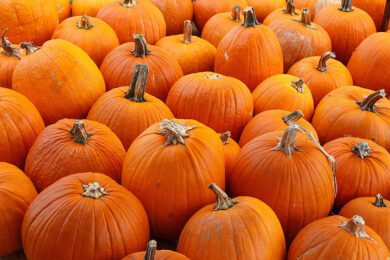 The Pumpkin Patch at South Mountain Christian Camp