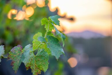 Just in Time for NC Wine Month…A Winery Video!