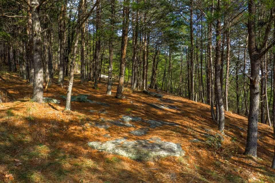 Bald Rock Trees