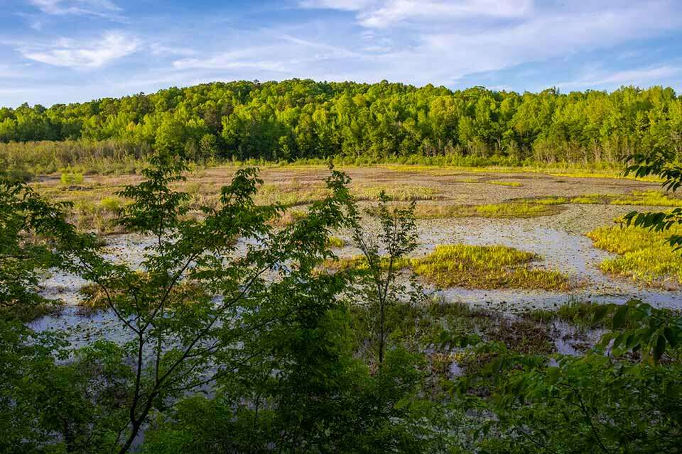 Forty Acre Rock Beaver Pond